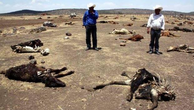 Sequía mata a cientos de animales, no hay agua ni para consumo humano